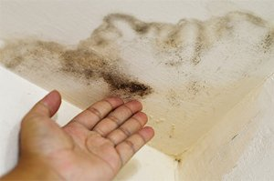 Mold Damage Restoration in Stockbridge, GA